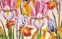 Servetel Irisi
