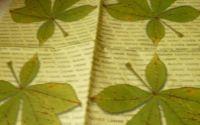 Serbetele cu frunze