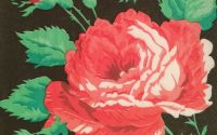 060 Servetel trandafir rosu pe fond negru