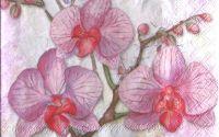 Servetel Orhidee 3