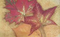282 Servetel frunze
