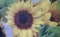 328 Servetel floarea soarelui 2