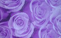 494 Servetel trandafiri mov