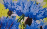 588 Servetel albastrele