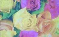 784 Servetel trandafiri galbeni
