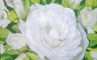 786 Servetel trandafiri albi