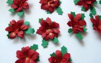 Flori Craciunite