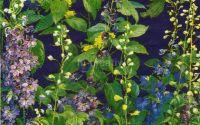 Servetel Delphinium blue - S1185