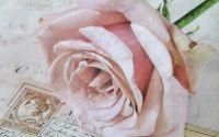 1000 Servetel trandafir vintage