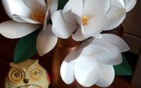 Magnolii hartie sidefata