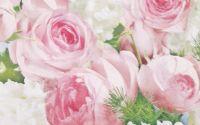 1025 Servetel roses