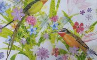 1094 Servetel pasarea colibri