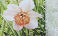 1146 Servetel narcisa alba