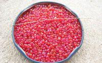 Margele de nisip rosu-curcubeu 2mm