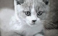 1439 Servetel pisicute