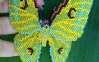 Fluturas Exotic Concurs Vacanta Exotica
