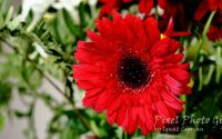 Ilustratie cu flori 2