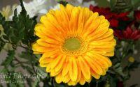 Ilustratie cu flori 4