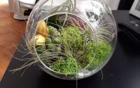 Mini terariu cu plante aeriene si muschi