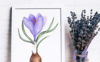 Brandusa violet