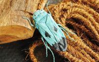 Brosa statement organica textila Cicadellidae