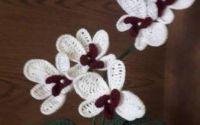 orhidee crosetate