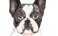 Portret de animalut de companie
