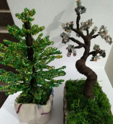bradut si copacel bonsai
