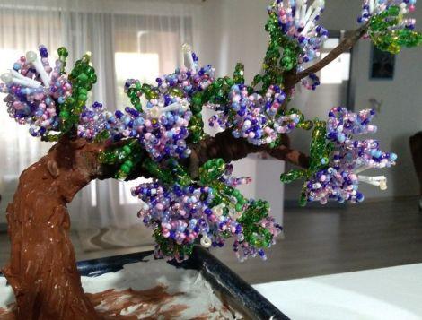 liliac bonsai