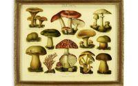 Tablouas cu o imagine cu ciuperci