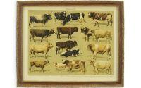 Tablouas cu o imagine cu vaci