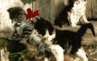 Servetel pisici